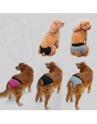 Culotte pour chiens